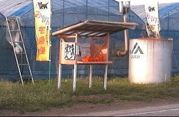 みかん無人販売所2006年